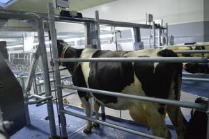 1e koe